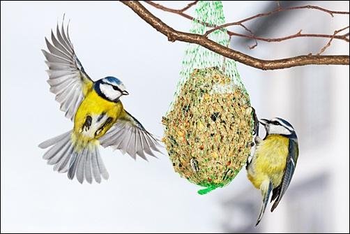 dokarmianie-ptakow-w-zimie2